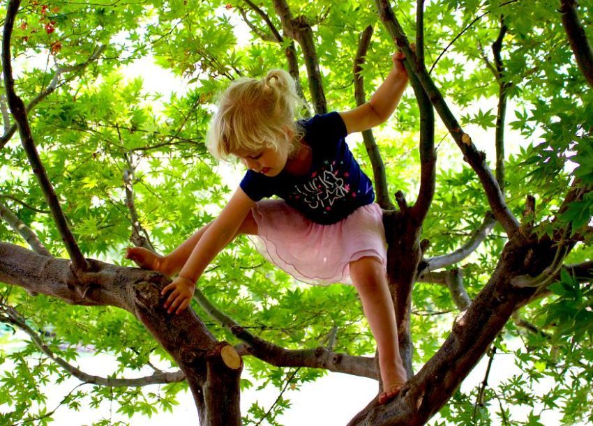 na strom
